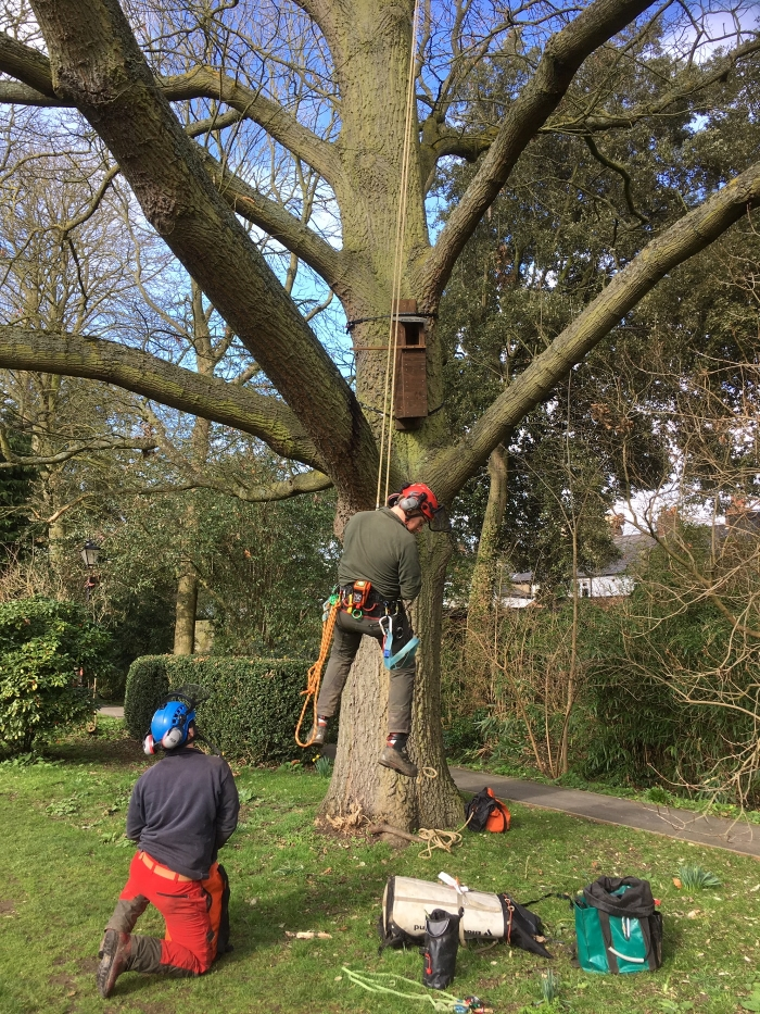 The arborists putting up two Tawny Owl nest boxes.